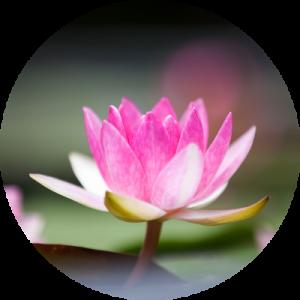 mingjue - heal your life